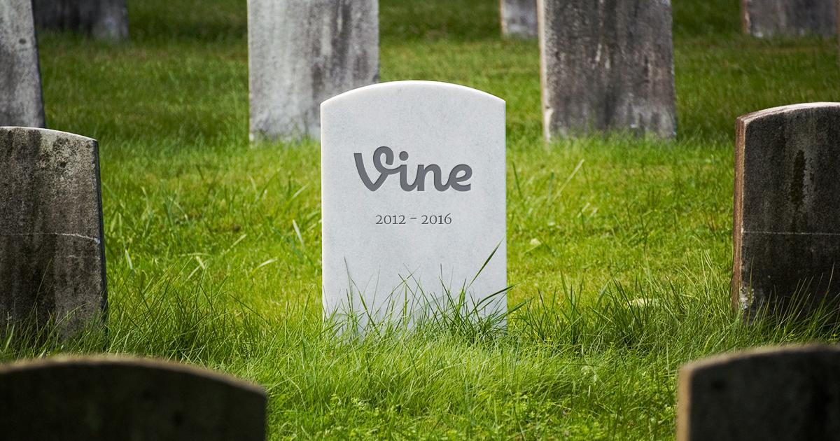 Last of the Summer Vine